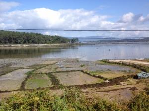 Carril clam farming