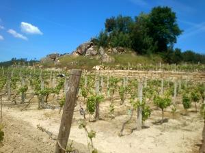 Ribeiro Vineyards